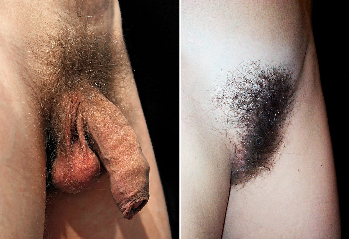 hair Male pubic