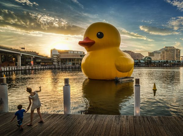 ducky Giant rubber