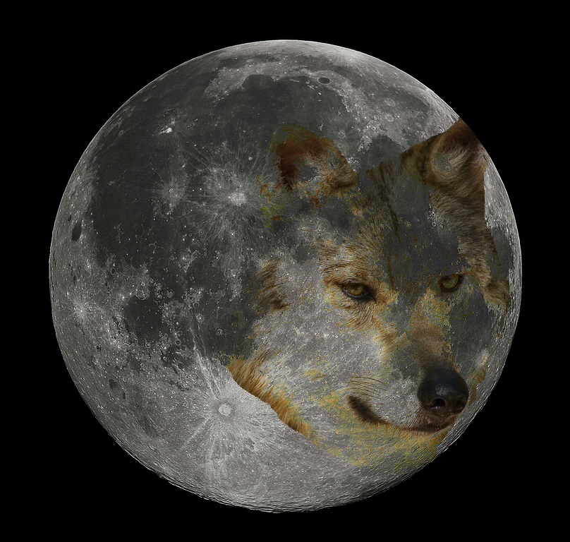 moon wolf Ginny weirick