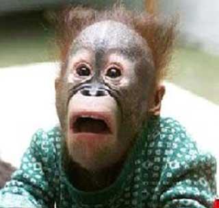 funny monkeys Super